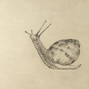 pen and ink snail