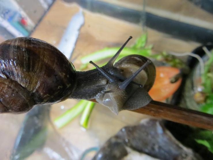 romantic snail nodule.JPG