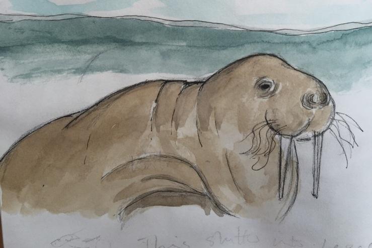 walrus sketch.JPG