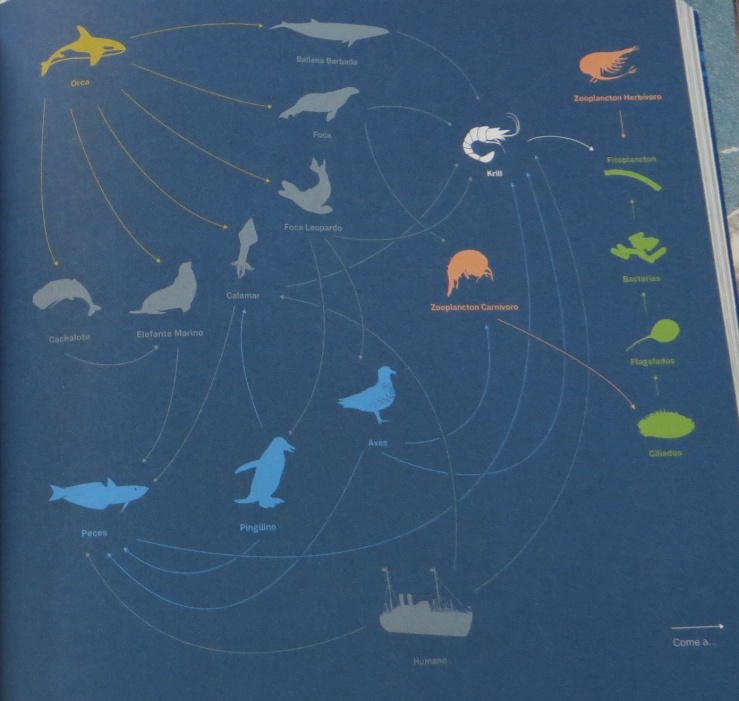 food web illo in book.jpg