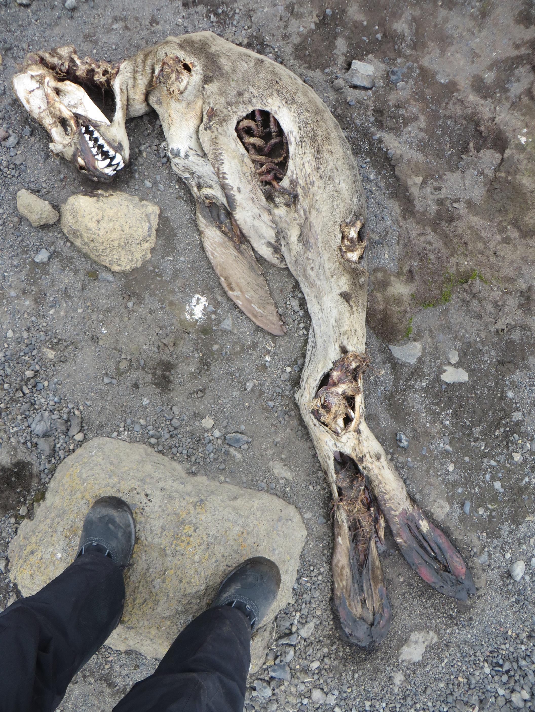 dead leopard copy.JPG